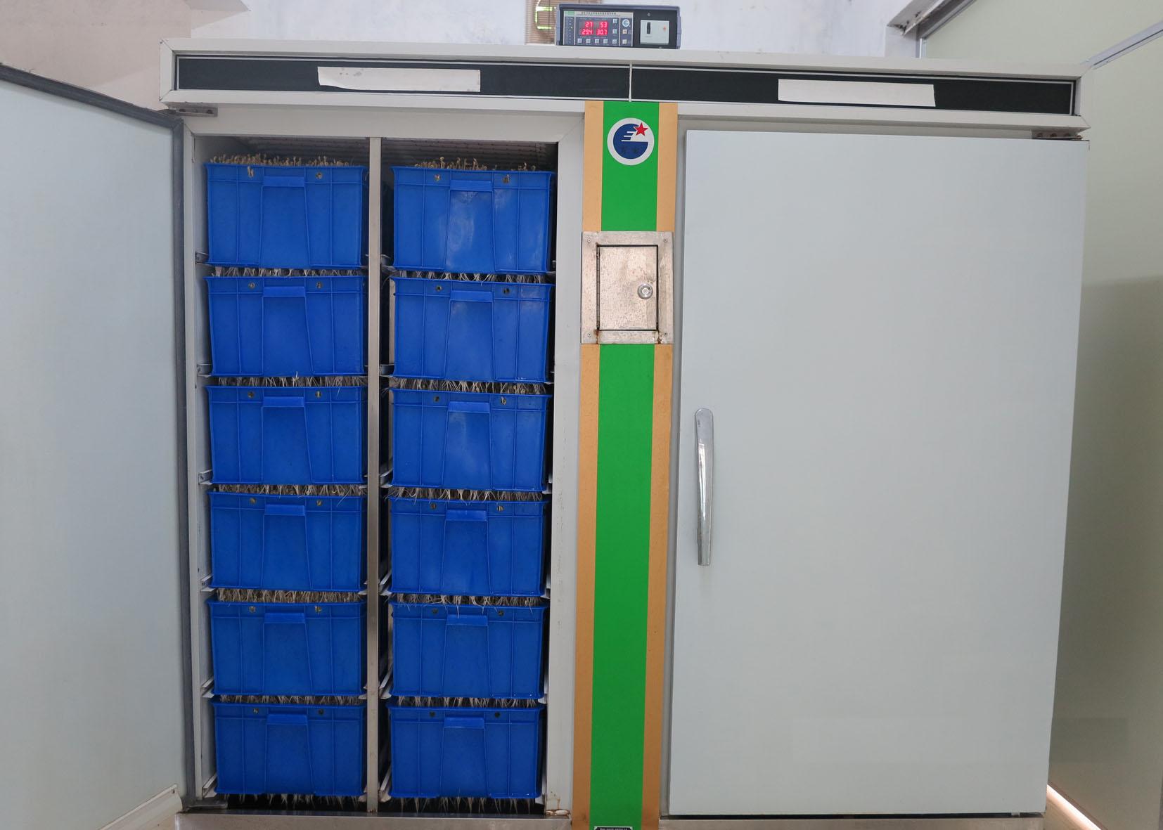 Máy làm giá đỗ công nghiệp sản lượng 100kg- 1 Tấn/ ngày